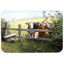 Las Vacas En Un Prado Botón De Oro De La Cocina O El Baño