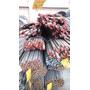 Barras Calibradas En Acero 1020 Y 1045 4140 Redondo