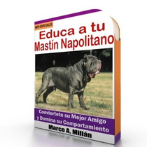 Como Educar A Un Mastin Napolitano - Guía De Adiestramiento