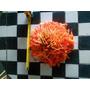 Flor De Guaramaco Sube Plaquetas