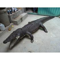 Animales Disecados 100% Artificiales, Tamaño Real