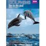 Espiando A Los Delfines Documental Bbc , Pelicula En Dvd
