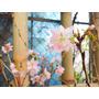 Cerezo Japones Arboles Chicos, Para Bonsai Y Jardin