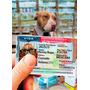 Visa,ife,ine,para Perro Envio Gratis A Todo Mexico Por Dhl