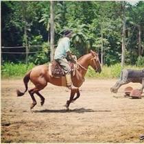 Ótimo Cavalo De Laço