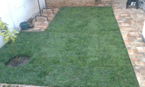 Pasto alfombra por palmetas en mercado libre - Cubre piso alfombra ...