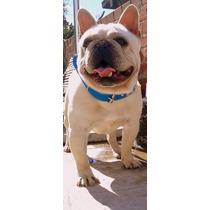Bulldog Frances Servicios Stud Paga Con Mercado Pago