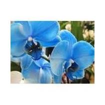 10 Sem De Orquidea Butterfly Frete Gr@tis, Compre 1 Leve 2