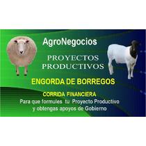 Borrego Inicia Negocio Proyecto Productivo Corrida Financie