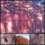 Leña De Quebracho Colorado