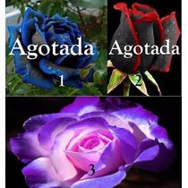 100 Semillas De Rosas Exóticas 3 Colores