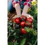 Manual Cultivo De Tomate