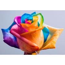 20 Sementes Rosa Rainbow Arco Íris + Para Enfeitar Sua Vida