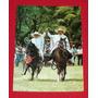 Antigua Postal Caballos De Paso Peruano Werner Bachmann