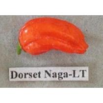 Semillas De Chile Dorset Naga-lt