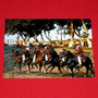 Caballos De Paso En Plazuela Trujillo Perú Brigitte Bachmann