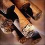 Consultas Espirituales Con El Tabaco Limpiezas Revocaciones