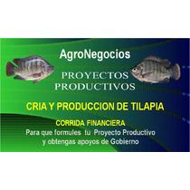 Corrida Financier Inicia Negocio Tilapia Proyecto Productivo