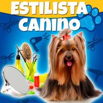 Estilista Canino Profesional Y Estetica Canina 2017