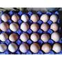 Huevos Fértiles De Gallinas Ponedoras + Envío Caba.