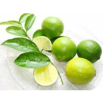 Arbol De Limon Persa, 1 Arbol Frutal, Citricos.
