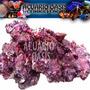 Roca Base Caribsea - Marinos - Reef Acuario Oasis - Envios