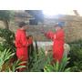 Suministro E Instalación De Plantas Eléctricas Generac
