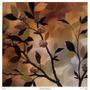 Poster (51 X 52 Cm) Sundown Bronze I Irene Paschal