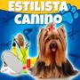 Estilista Canino Profesional Y Estetica Canina + Videos