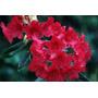 Espectaculares Arbustos De Rhododendron!!!
