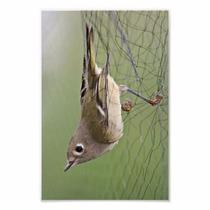 Rede Neblina Névoa Captura Pássaros E Morcegos 15 X 2.5m