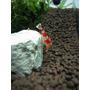 Mineral Shirakura Stone Pedra Mineral Aquário Camarões