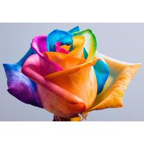 12 Sementes De Rosas Arco-íris (raras Frete Gratis