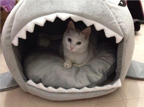 Exclusiva cama tibur n para perros y gatos talla m for Cama para gatos