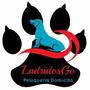 Peluqueria Canina A Domicilio, Cortes, Desanudados, Baños