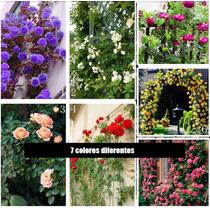 140 Semillas Rosal Trepador Enredadera 7 Colores