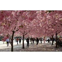 Semilla De Árbol De Flor De Primavera Hermoso