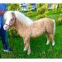 Caballitos Miniatura (pony)