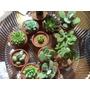 Macetas De Barro Con Cactus Y Suculentas Mini.