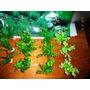 Kit Decoração, 48 Plantas Artificiais Com Base + Painel