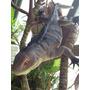 Iguana Juguete De Goma Super Real 30cm Increible Realismo!!!