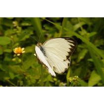 Liberación De Mariposas Vivas Un Detalle Especial!!