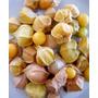 Semillas De Tomatillo Sabor Ananás Physalis Pruinosa Fruta