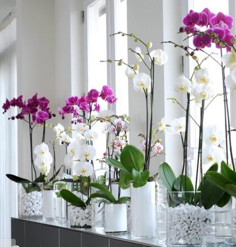 Orquideas Phalaenopsis Con 4 Flores 60000 En Mercado Libre - Orquideas-blancas-cuidados