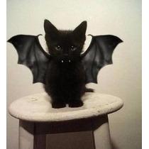 Disfraz De Alas De Vampiro Para Mascota Perro Gato