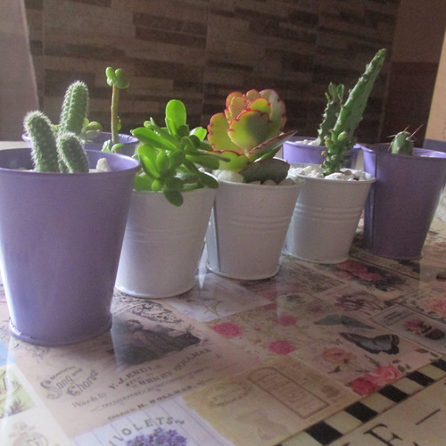 cactus grandes en macetas para comprar carrefour casa dise o. Black Bedroom Furniture Sets. Home Design Ideas