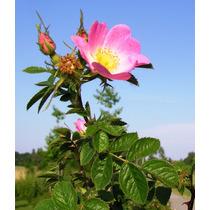 Kit Crema Y Aceite Rosa Mosqueta Rejuvenece Piel Antiarrugas
