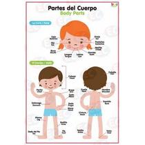 Poster Partes Del Cuerpo Y Prendas Bilingüe De Biyu 4 Piezas