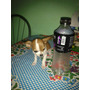 Perrito Chihuahua Mini