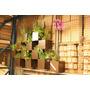 Suporte Vaso Cachepot Horta Flor Ornamental Vertical Parede